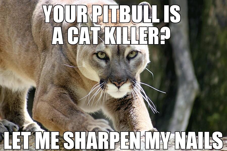 cougar status meme