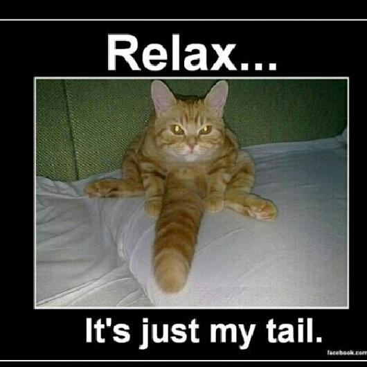 Relax - meme