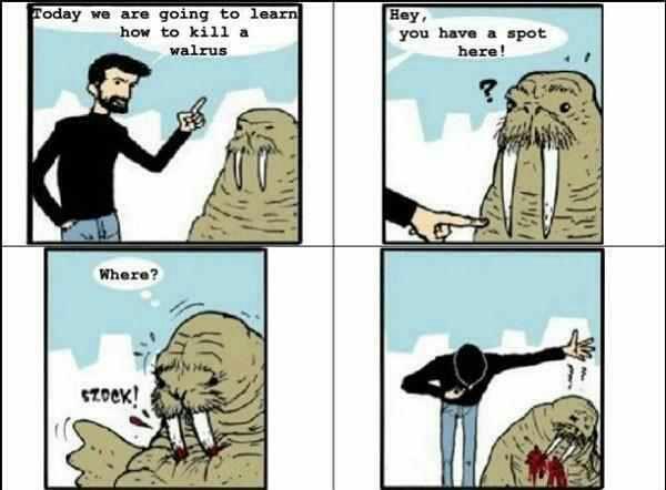 walrus - meme
