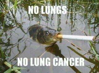 La cigarette ! Les effets nocifs sur les poissons 5049d7000ea9d