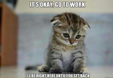 poor kitty (._. ) - meme